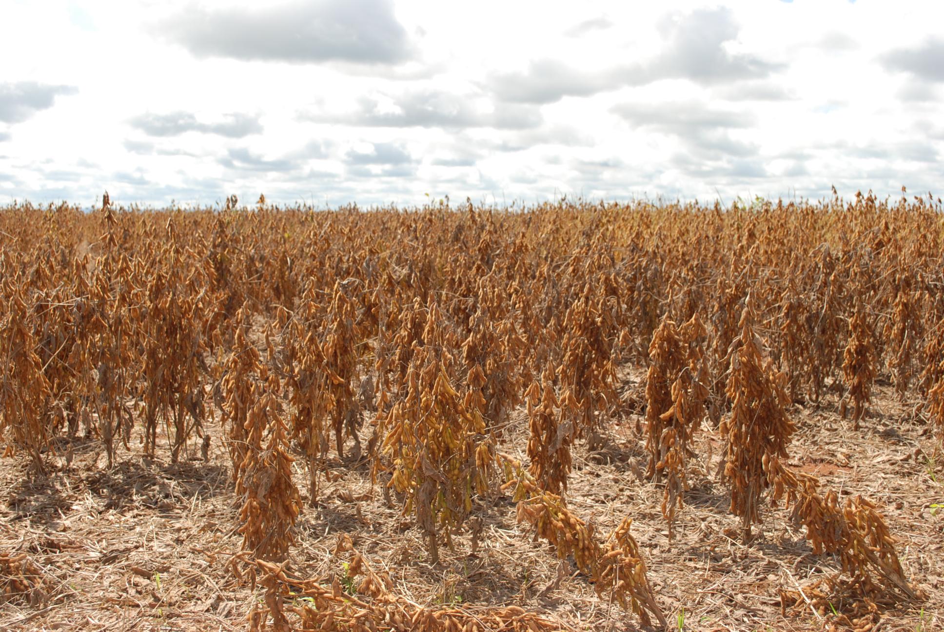 Adapec fiscalizará a comercialização e uso do herbicida paraquat que estará proibido a partir do próximo dia 22
